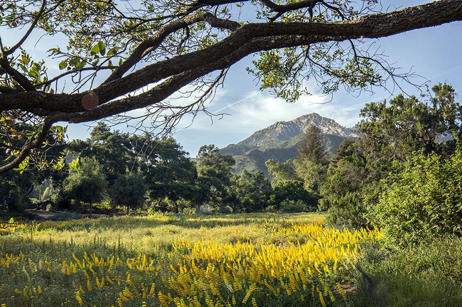 Van-Atta-Associates-Santa-Barbara-Botanic-Garden-01